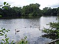 Lakes at Fen Place - geograph.org.uk - 226181.jpg