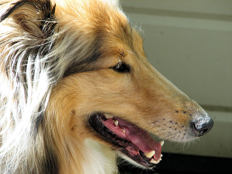 Curved Nose Dog Breed