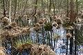 Landschaftsschutzgebiet Oldhorster Moor (LSG-H46) (04).JPG