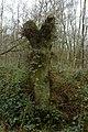 Landschap De Stroopers te Kemzeke - 372041 - onroerenderfgoed.jpg