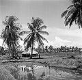 Landschap in Nickerie, Bestanddeelnr 252-5514.jpg
