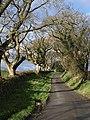 Lane approaching Tregeare - geograph.org.uk - 719032.jpg