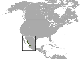 Large-eared Gray Shrew area.png