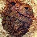 Lateral cut ^1 - Flickr - Stiller Beobachter.jpg
