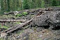 Lava Tubes, Gifford Pinchot National Forest (36338770714).jpg