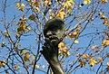 Le Marchand de Masques par Zacharie Astruc Masque de Victor Hugo.jpg