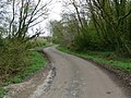 Leafy lane to Farm Town - geograph.org.uk - 797410.jpg