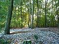 Leaves and Snow (2985258848).jpg