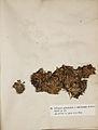 Lichenes Helvetici I II 1842 021.jpg