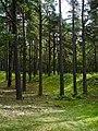 Lielupes mezs - panoramio.jpg