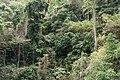 Limestone forest, Bacuit Bay, Palawan, Philippines.jpg