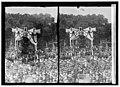 Lindbergh LCCN2016822891.jpg