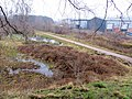 Linear Park at Laymoor Quag - March 2013 - panoramio.jpg