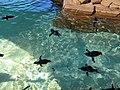 Little blue penguins.jpg