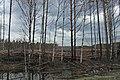 Logging - panoramio.jpg