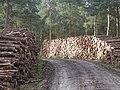 Logging on Haughmond Hill - geograph.org.uk - 1036621.jpg