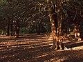 Long Walk Wood - geograph.org.uk - 450107.jpg
