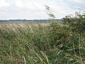 Looking Over The Reeds - geograph.org.uk - 251480.jpg