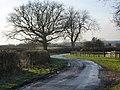 Looking along Grove Lane - geograph.org.uk - 1638556.jpg