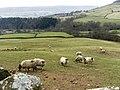 Looking west - geograph.org.uk - 1206282.jpg