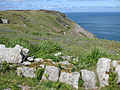 Lundy bluebells - geograph.org.uk - 1322767.jpg