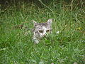 Lurking cat.jpg