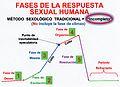 Método Fazsufu - Fases de la respuesta sexual humana científica.jpg