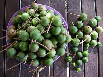 Macadamia oil - Fresh macadamia nuts