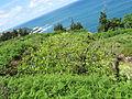 Madeira em Abril de 2011 IMG 1575 (5661372905).jpg