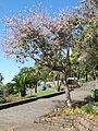 Madeira em Abril de 2011 IMG 1767 (5663212271).jpg