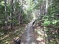 Major Kollock Creek Trail, Kouchibouguac National Park, NB (14364812424).jpg