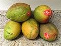 Mango 1 2016-06-10.jpg