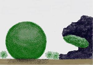 Die 3 Wuchsformen der Alge