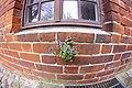 Mauerblümchen - Wallflower (16540608023).jpg