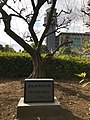 Memorial of Plum tree in NRT.jpg