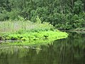 Metsäjärvi (Kultarannanjärvi), Naantali, 18.7.2010 (3).JPG