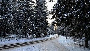 Miškas šalimais Tapelių žiemą.JPG