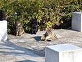 Miokittycat20080105.jpg
