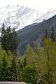 Mixed Trees - Solang Valley - Kullu 2014-05-10 2597.JPG