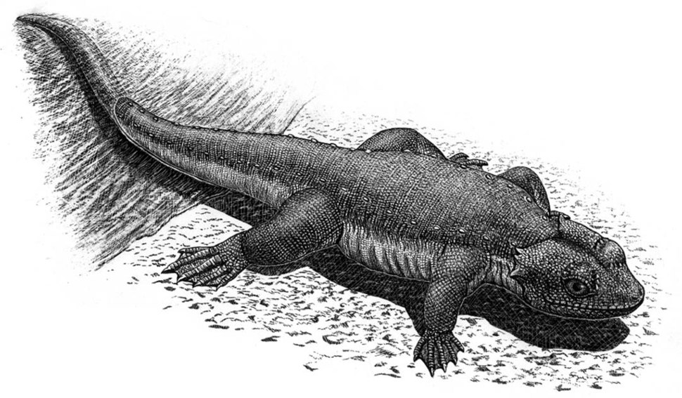 Monjurosuchus