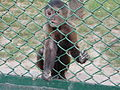 Monkey in zoo1.jpg