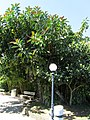 Monkeys tree - panoramio.jpg