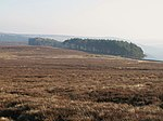 File:Moorland and plantation near Riddlehamhope - geograph.org.uk - 704976.jpg