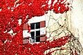 Moosburg Schloss Westwand Weinranken mit Fenster 22102010 22.jpg