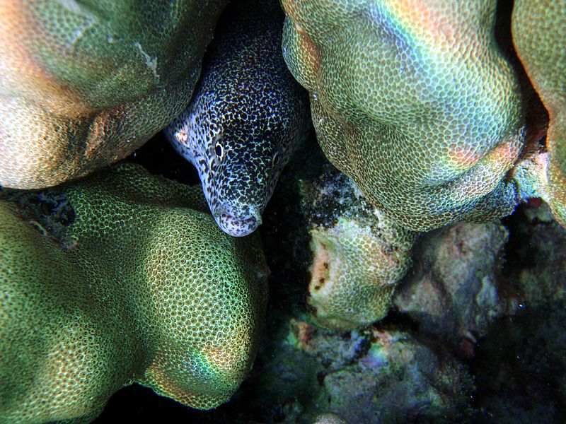File:Moray eel and caustic.jpg