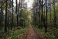 Moscow, road through Losiny Ostrov forest (30888099204).jpg