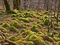 Moss covered rocks - geograph.org.uk - 506693.jpg