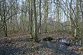 Motte op de Butsberg te Tielt-Winge - 372490 - onroerenderfgoed.jpg