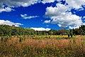 Mountaintop Meadow (1) (8018073628).jpg