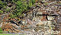 Muscovite schist (Precambrian; Blue Ridge, North Carolina, USA) 8.jpg